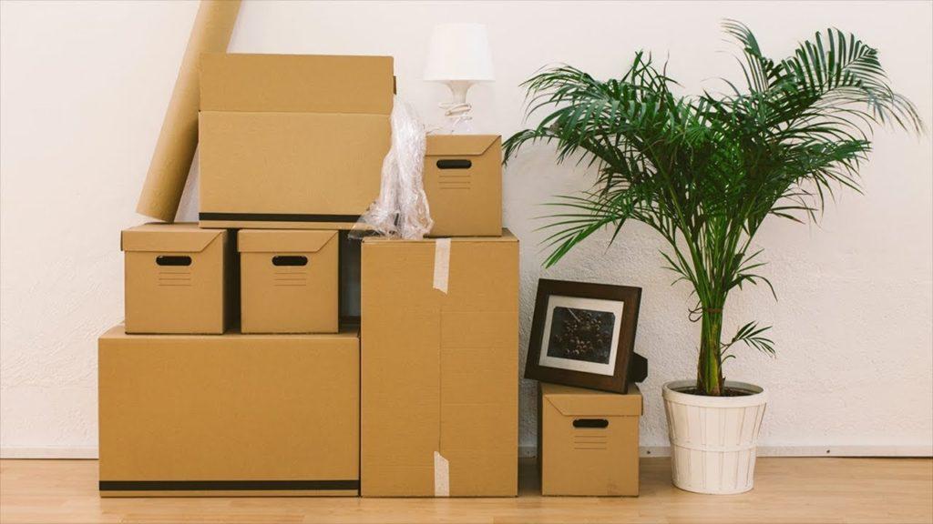 перевозка комнатных растений