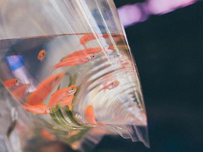 как перевозить аквариумных рыбок фото