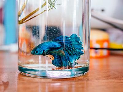 перевозка аквариумов фото