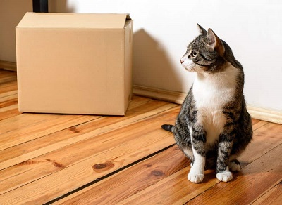 Подготовка к переезду кошки